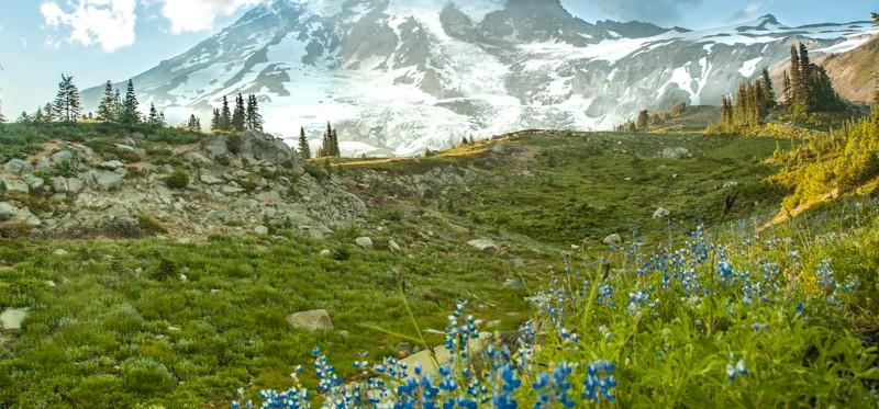 Mount Rainier, Washington, spring meadow