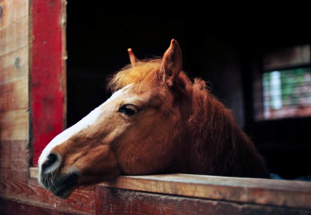 SFS_32_horse1