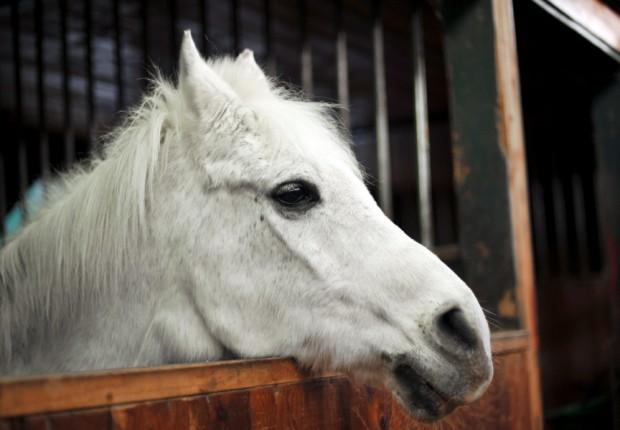SFS_32_horse2