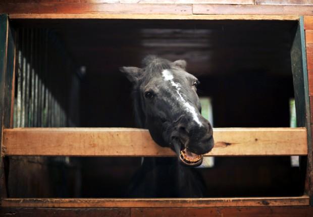 SFS_32_horse4