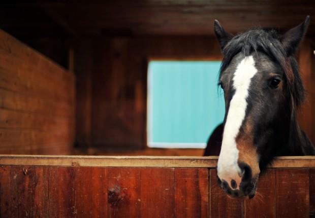 SFS_32_horse5