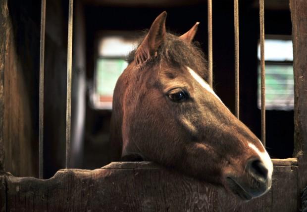 SFS_32_horse6