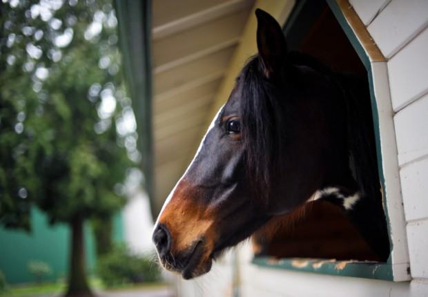 SFS_32_horse7