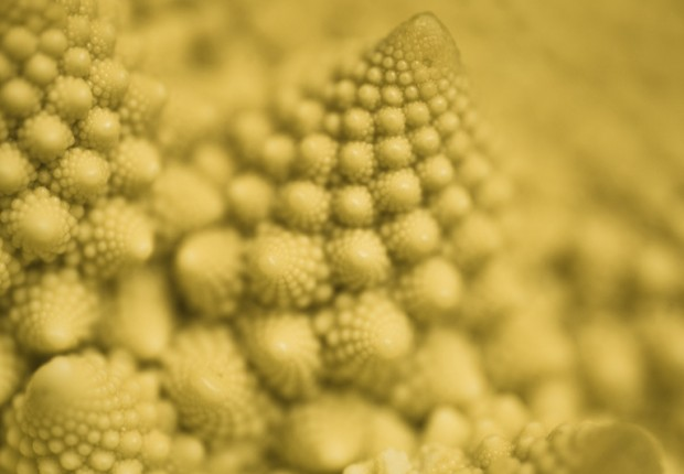 TCF_rainbow_romanesco-2