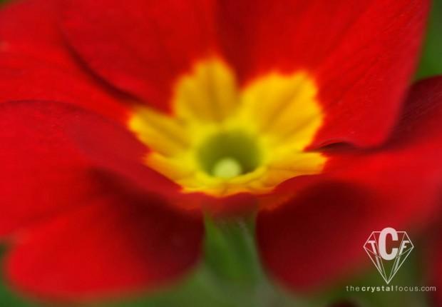 spring flower macro