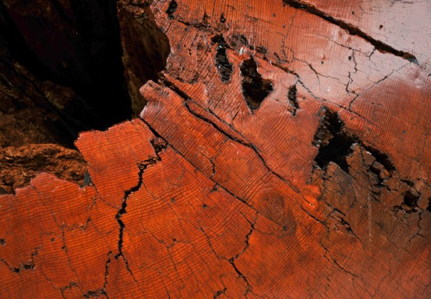 TCF_ancient_log_texture_abstract-1