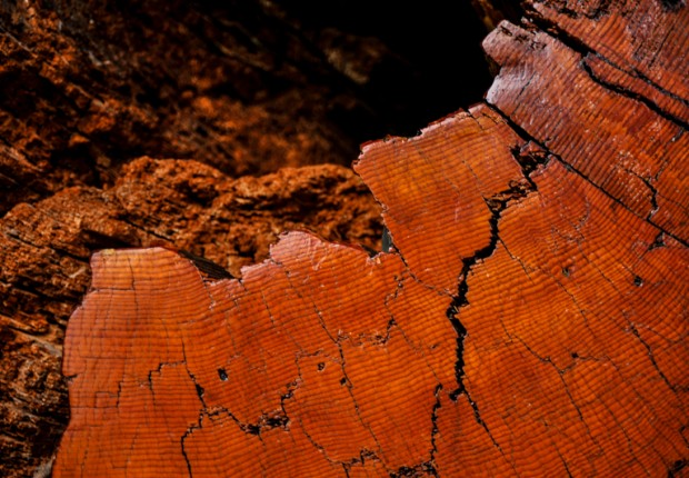 TCF_ancient_log_texture_abstract-3
