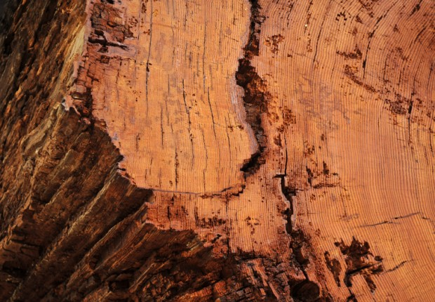 TCF_ancient_log_texture_abstract-4