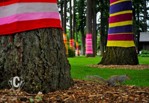 TCF_SFS_060312_treesocks7