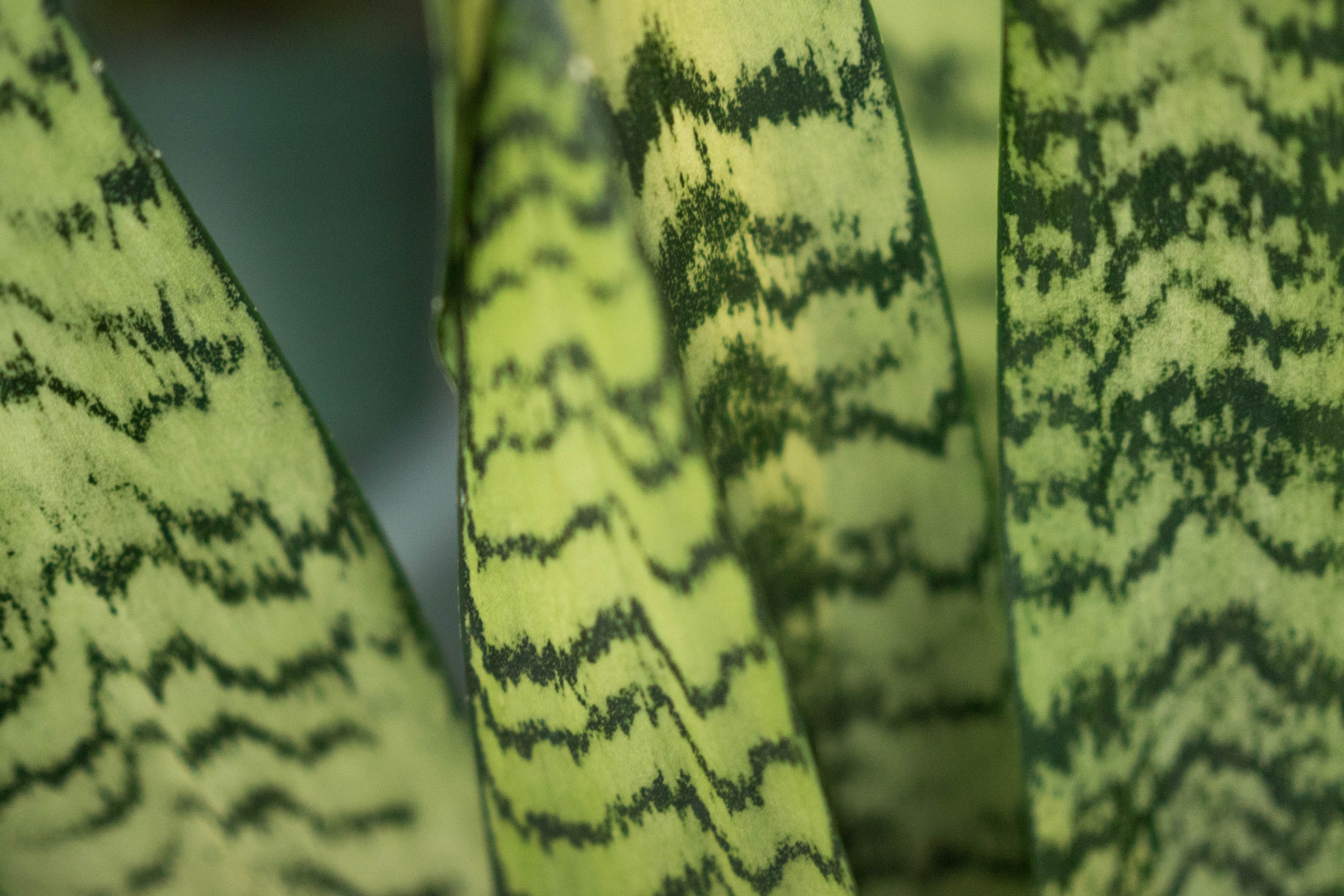 plant patterns