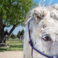 Bubbles the Horse