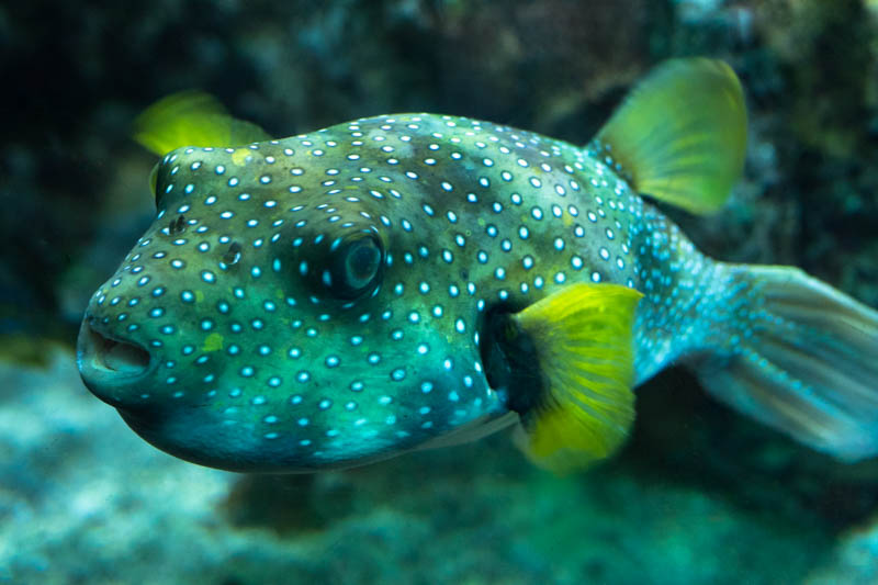 ocean marine life fish