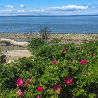 Puget Sound spring flowers