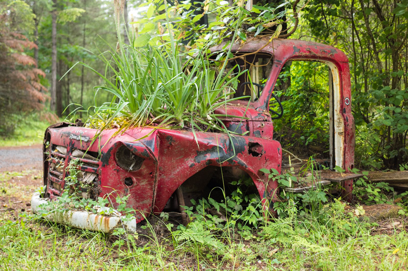 nature reclaiming old red truck