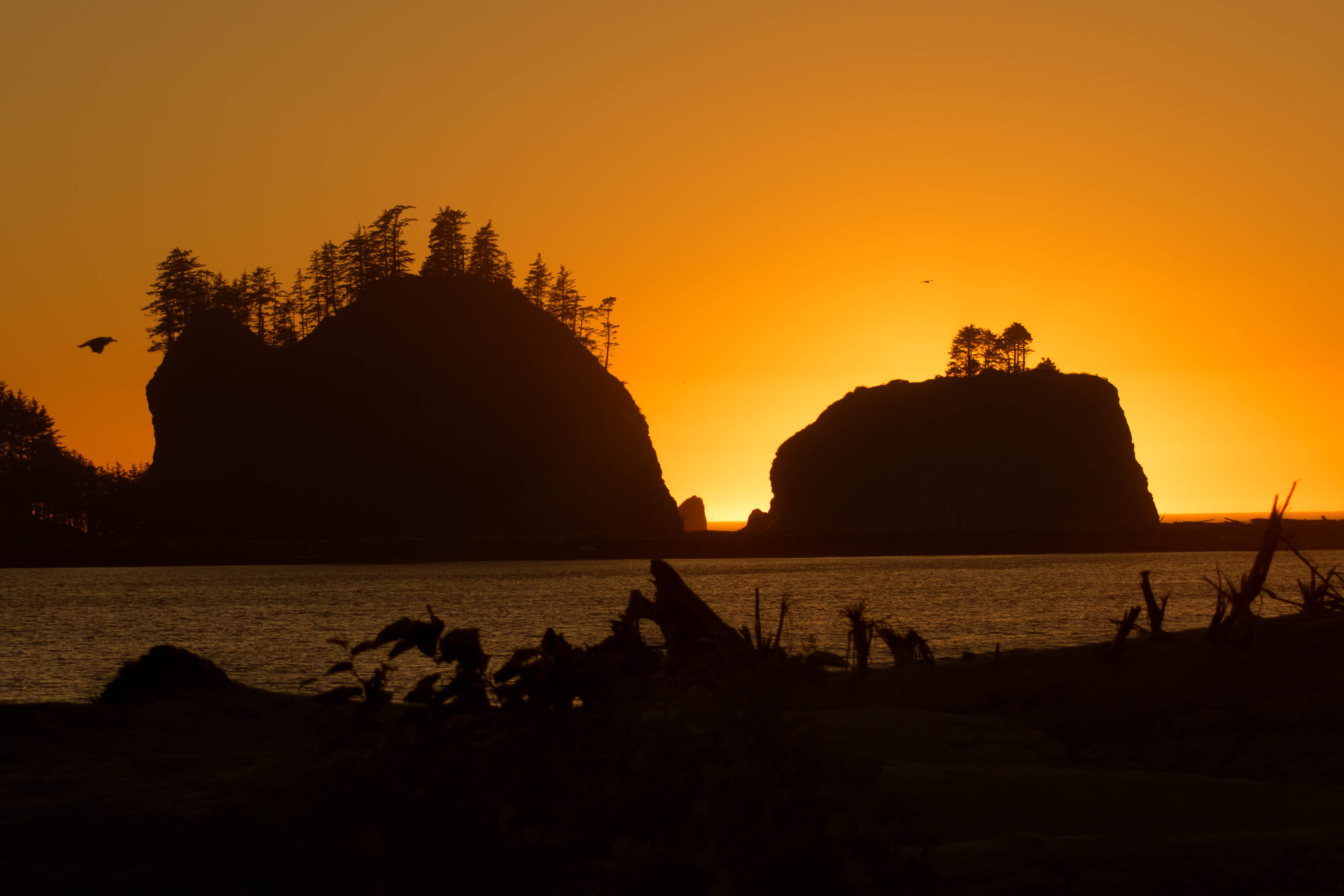 Washington Coast, coast, la push, ocean, pacific northwest, quileute indian reservation