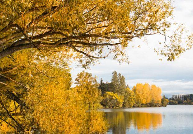 tcf_sfs_101616_autumn_stroll-4