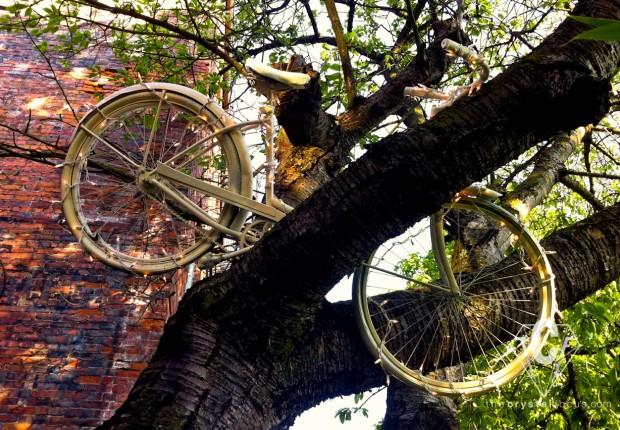 Tree Bike Lights