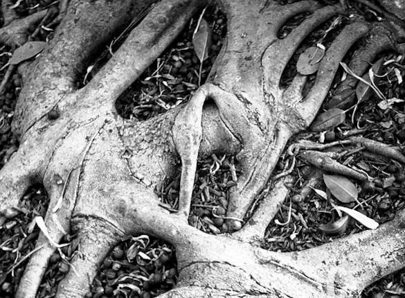 TCF_SFS_110412_Tree_Roots_3