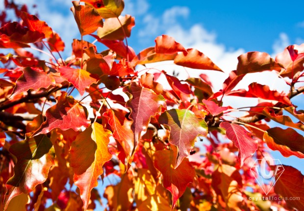 TCF_SFS_111112_Colorful_Autumn_4