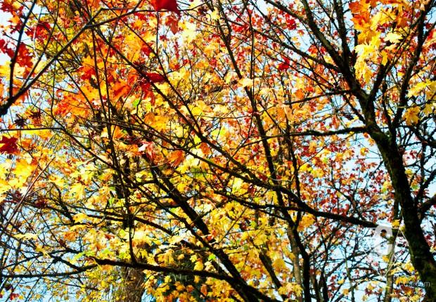 TCF_SFS_111112_Colorful_Autumn_5