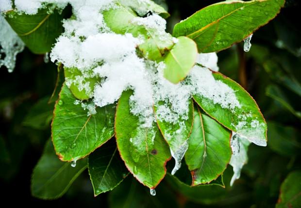 TCF_SFS_122312_04_Leaf_Frost