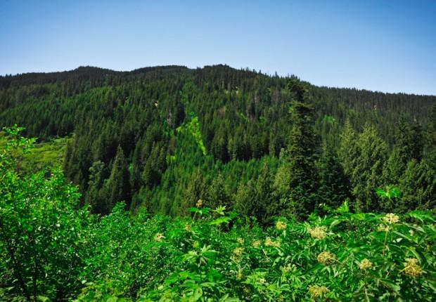 TCF_SFS_122312_05_Green_Forest