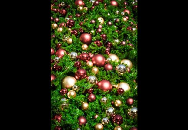 TCF_SFS_122312_07_Christmas_Tree