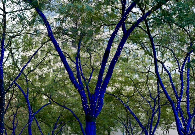 TCF_SFS_123012_03_Blue_Trees