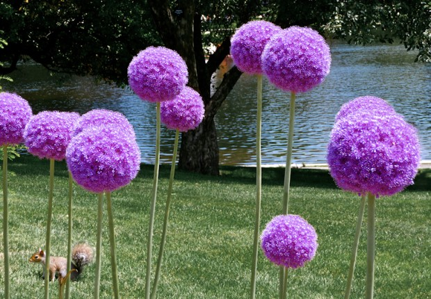 TCF_SFS_010613_05_Purple_Pom_Pom_Flowers