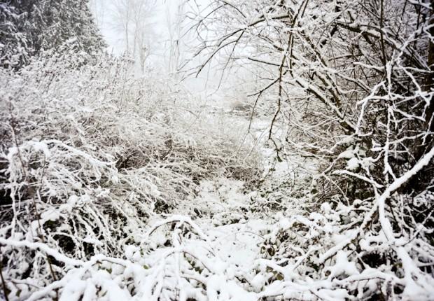 TCF_SFS_011313_05_Snowy_Woods