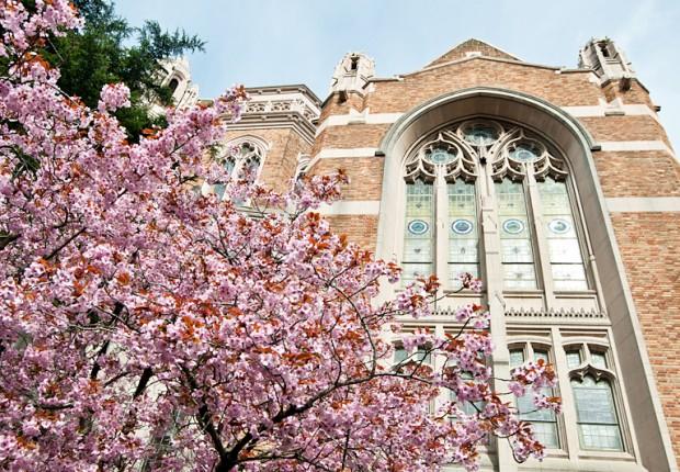 TCF_SFS_040713_01_Cherry_Blossoms_UW