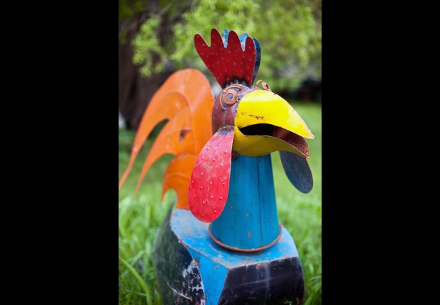 Gallus gallus chalybeius_Steel Rooster