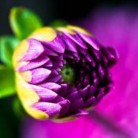 summer flower macro