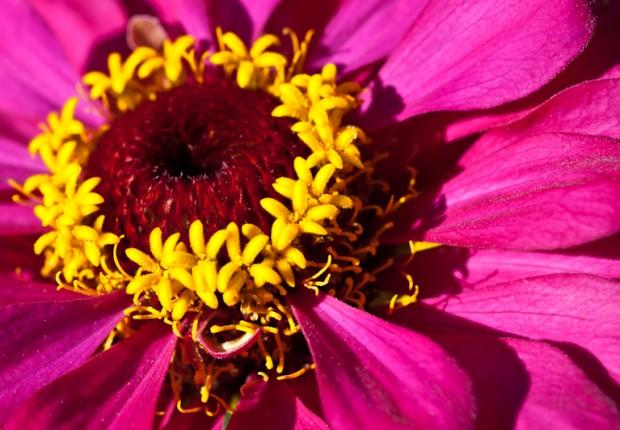 Fleur d'lete