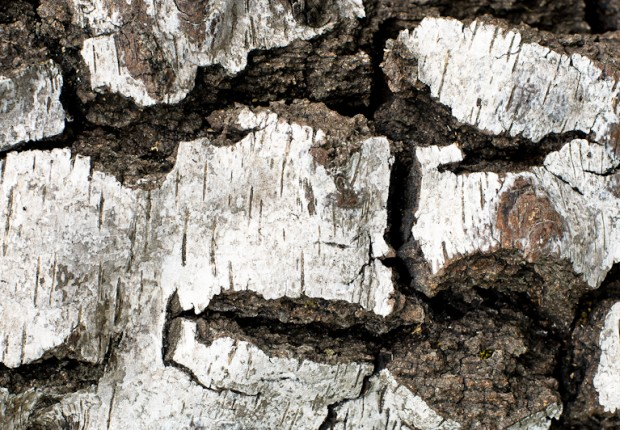TCF_SFS_091513_03_rock_on_wood