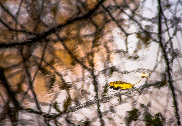 TCF_SFS_120113_pond_reflections-1