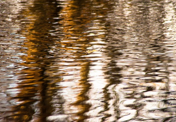 TCF_SFS_120113_pond_reflections-2