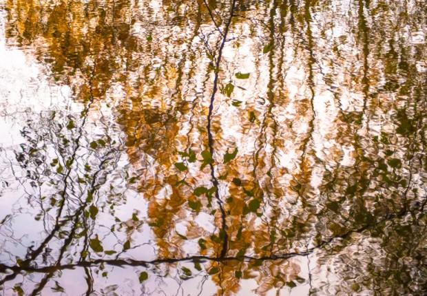 TCF_SFS_120113_pond_reflections-3