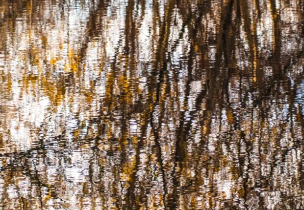 TCF_SFS_120113_pond_reflections-6
