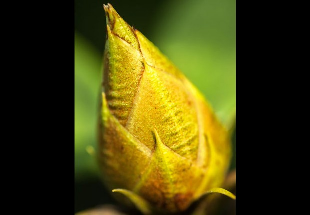 TCF_SFS_030214_tiny_buds_wp-2
