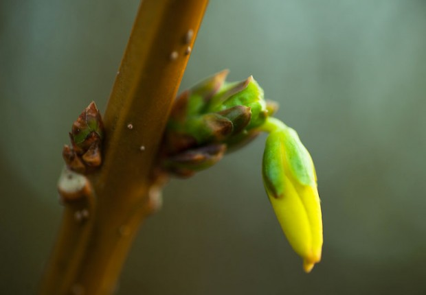 TCF_SFS_030214_tiny_buds_wp-7