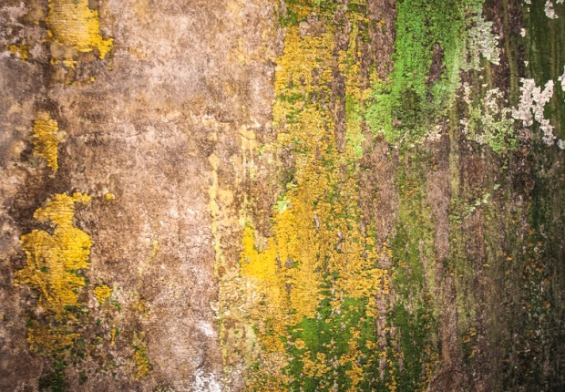 TCF_SFS_061514_Touch_of_Texture-3