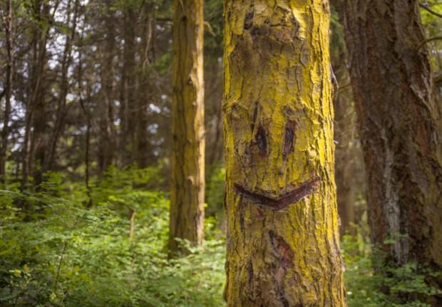 Happy Tree Smiling