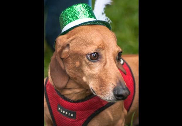 Oktoberfest Wiener  Dog