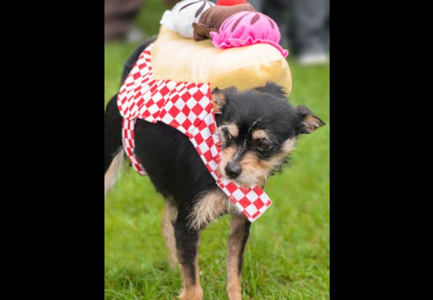 Dog in Sundae costume