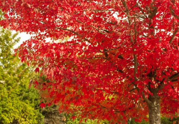 Love Those Leaves