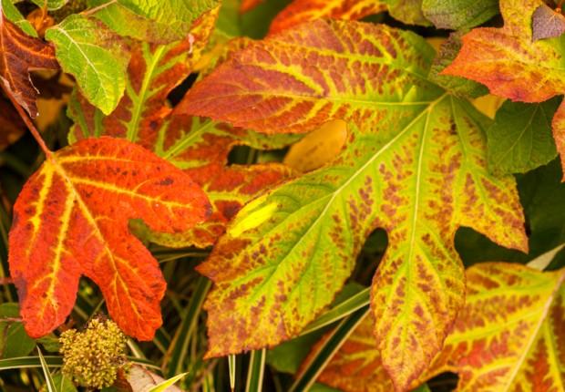 Loves Those Leaves