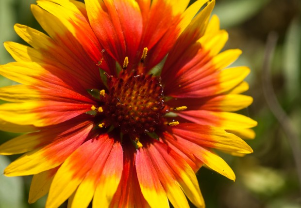 Sunburst Flower