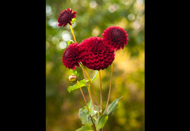 TCF_SFS_110214_Fall_Flowers-1_mc