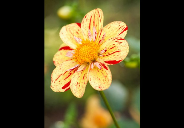TCF_SFS_110214_Fall_Flowers-3_mc